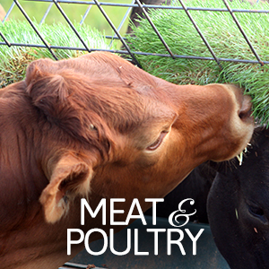 meat-poultry