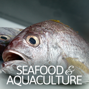 seafood-aquaculture